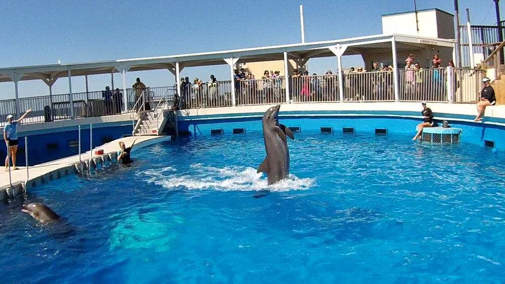 Delfinshow im Gulfarium, Marine Adventure Park in Fort Walton Beach, Florida USA