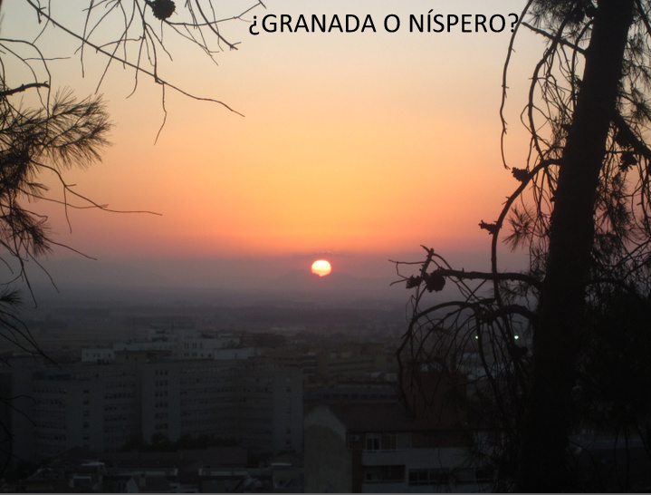 ¿Granada o Níspero?
