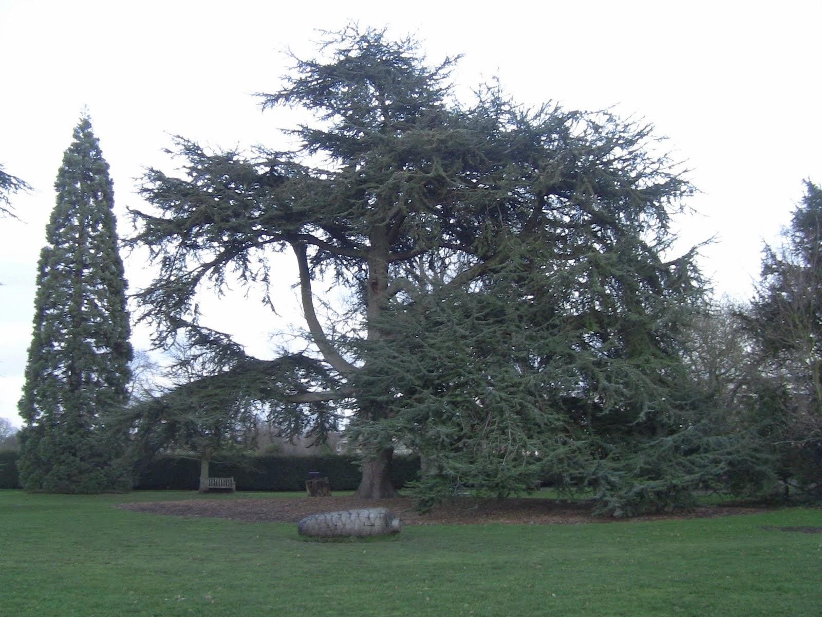 le parc de Fulham Palace