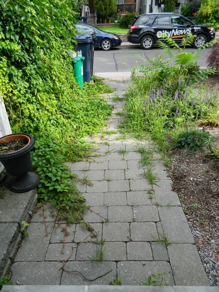 Paul Jung Gardening Services Toronto Leslieville garden cleanup front path before