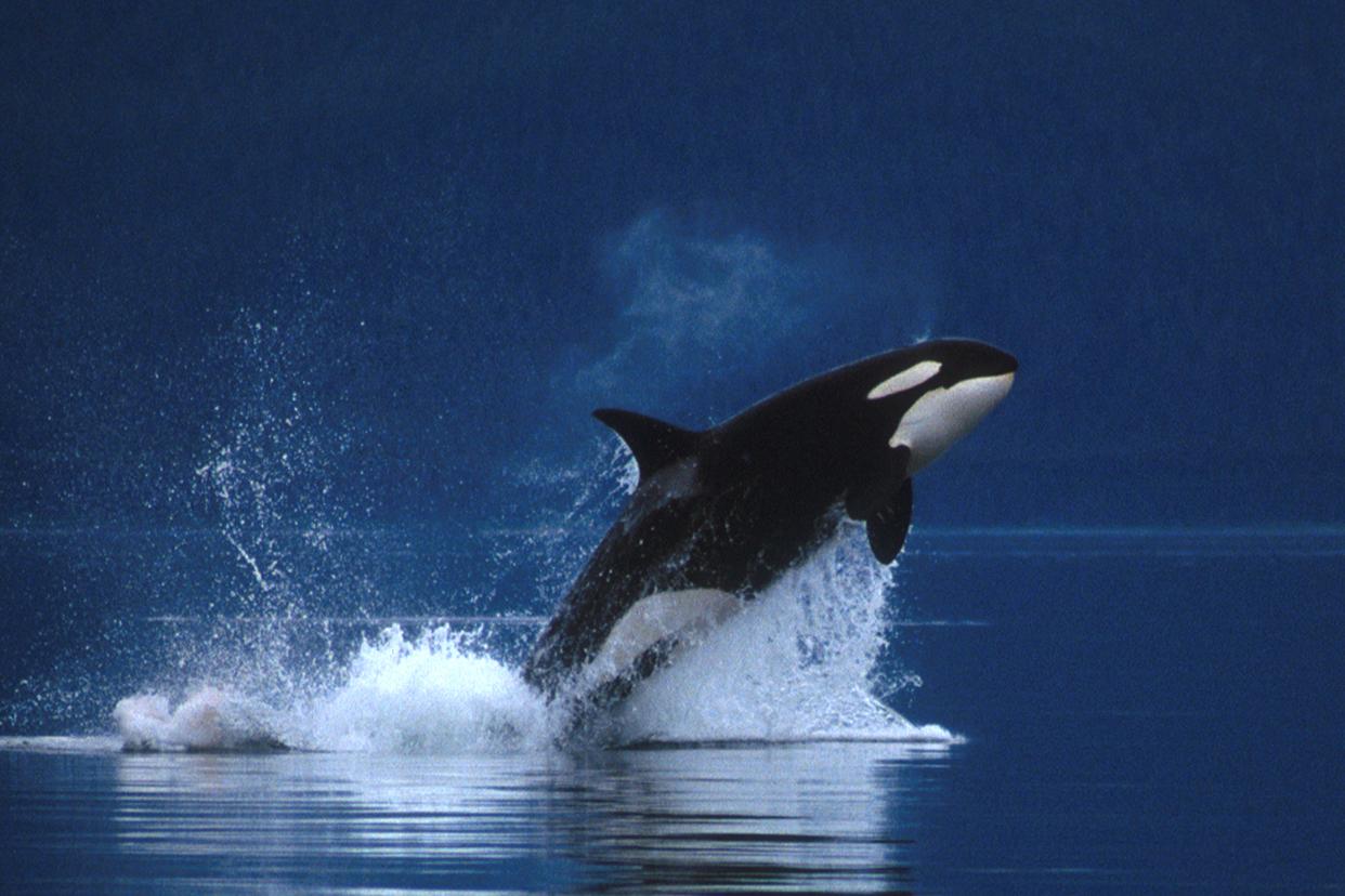 fotos de animales de todo el mundo - FOTOS: los animales más peligrosos del mundo El Comercio