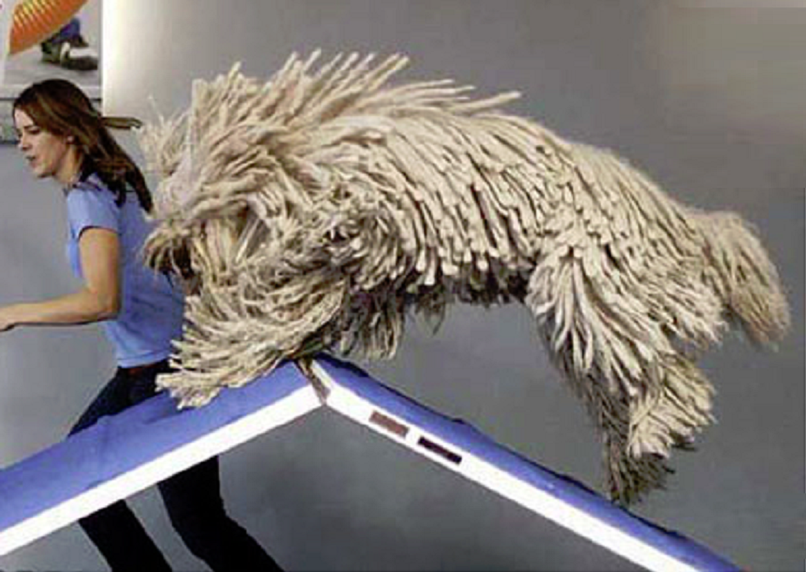 Aylmer to Zazzoo and Beyond: Komondor: The Rasta Dog