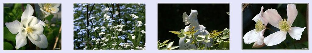 ✿Lunas Garten-Rosen-Vielfalt✿
