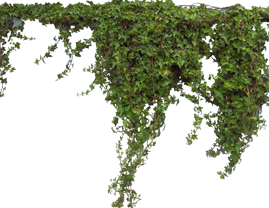 Similiar Vines Transparent Background Keywords