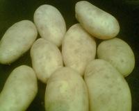 potato_suppliers_egypt