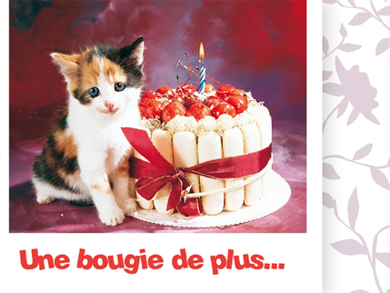 carte-anniversaire-chat