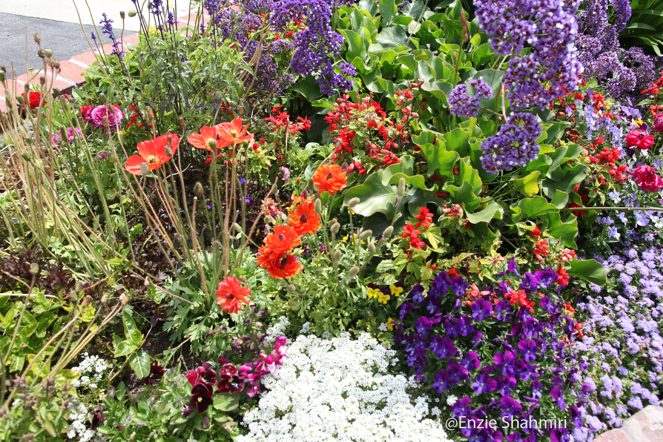 Flower bed ideas pictures beautiful flowers for Flower landscape ideas