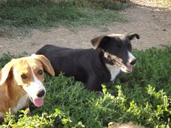 Bon und Bonita suchen ein zu Hause