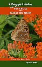Butterflies of Kansas City