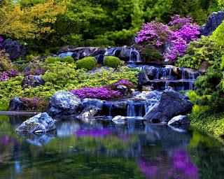 flores en color morado que se refleja en el agua