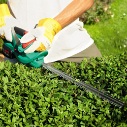 Cordless Hedge Cutters Online | Buy Bosch Cordless Hedge Cutter, India - Pumpkart.com