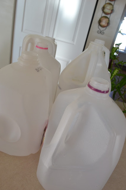 Use Milk jugs to make mini-greenhouses.