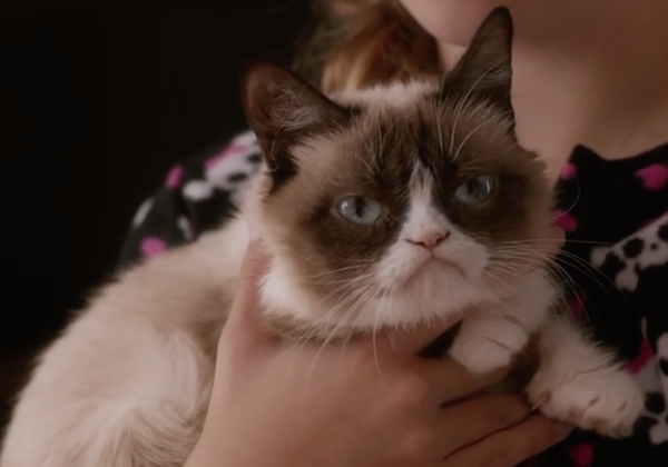 "Trailer de ""Grumpy Cat"""