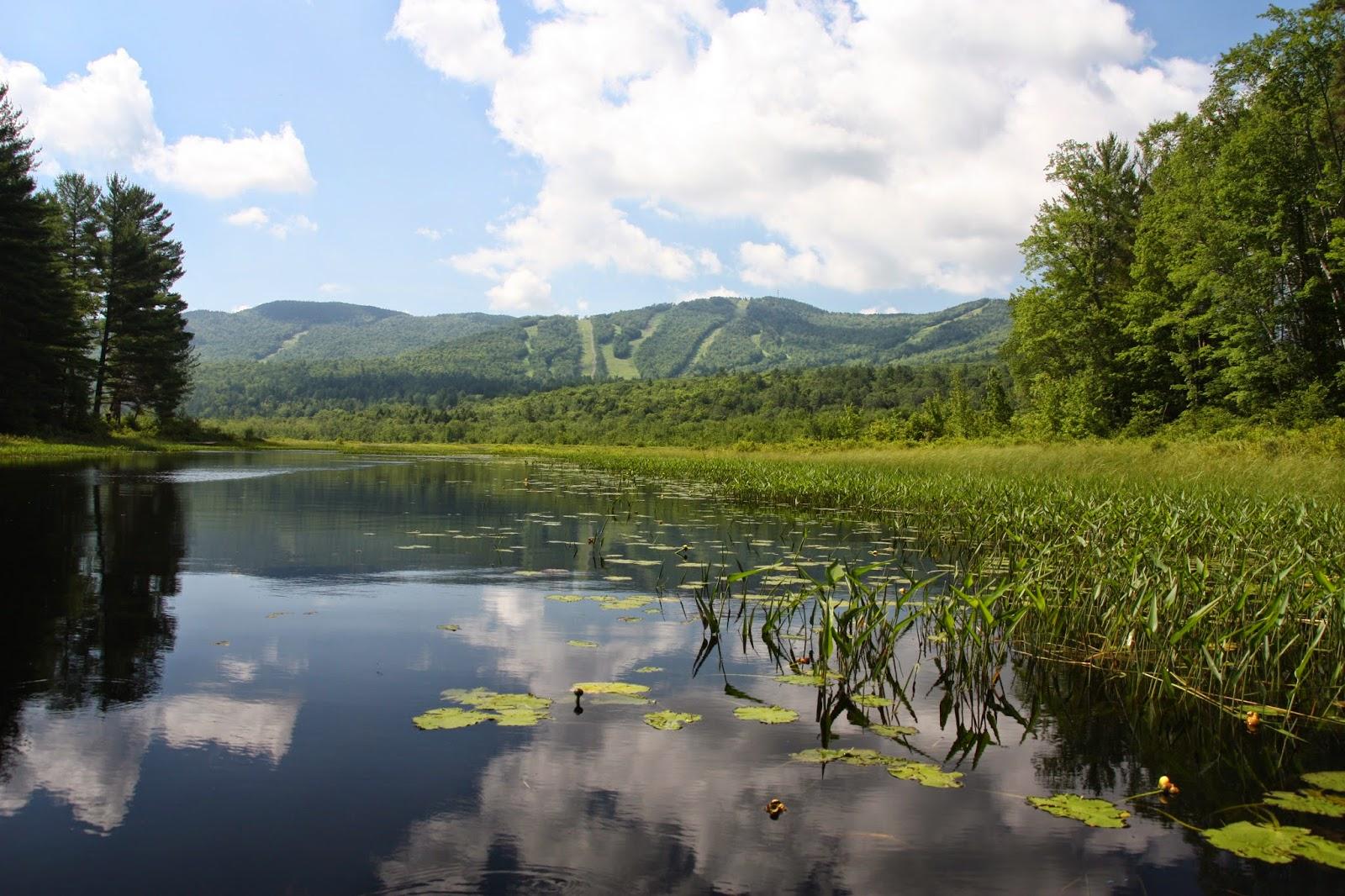 The Kayaking Bison Of New Hampshire Bog Pond Danbury Nh