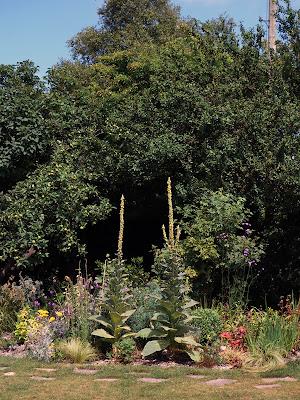 Sussex garden in late summer