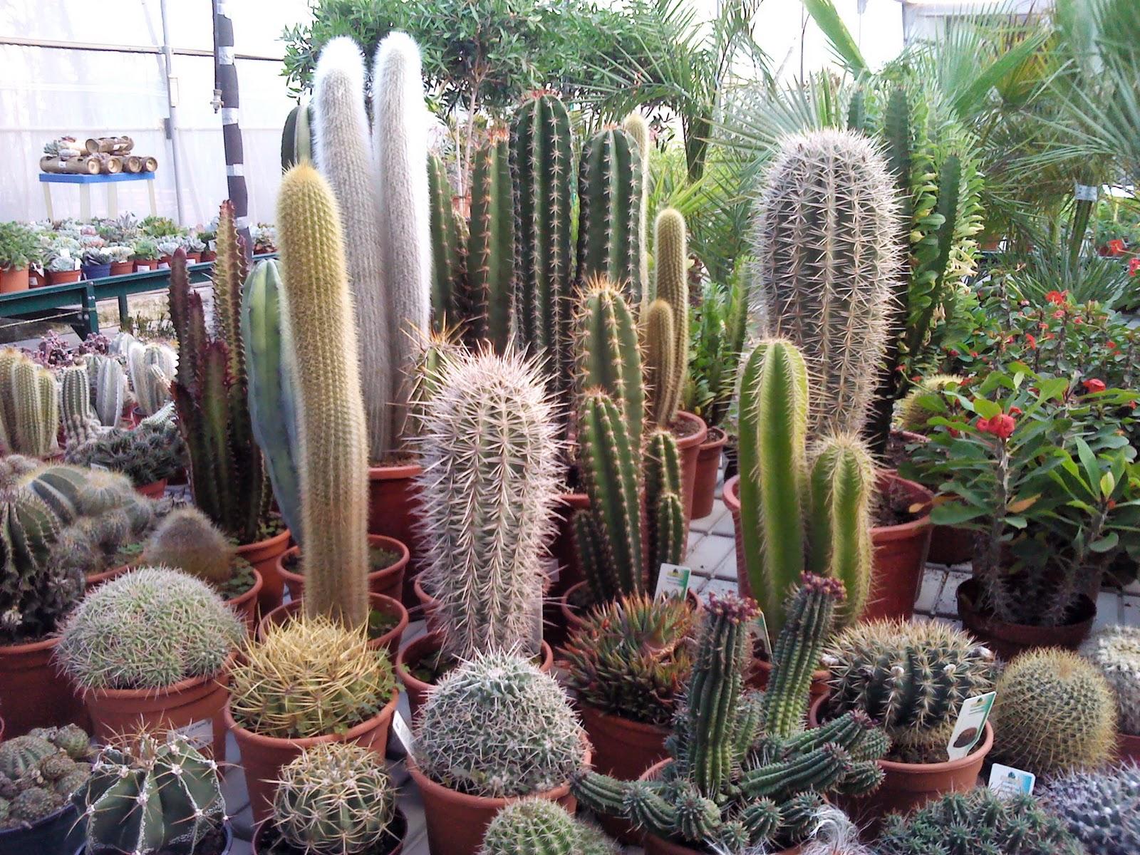 GARDEN LA PALMA: Crasas y Cactus