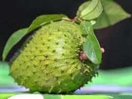 Banyaknya Manfaat buah sirsak Untuk Kesehatan