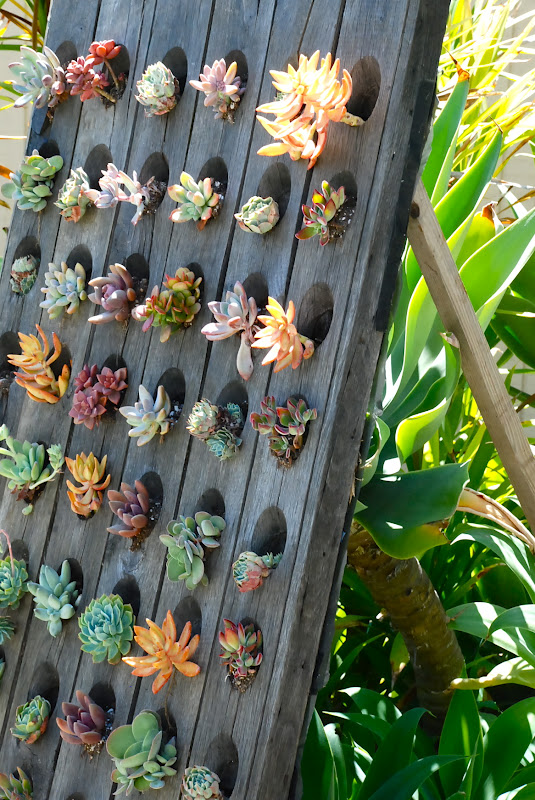 great idea upright succulent garden with succulent gardens ideas