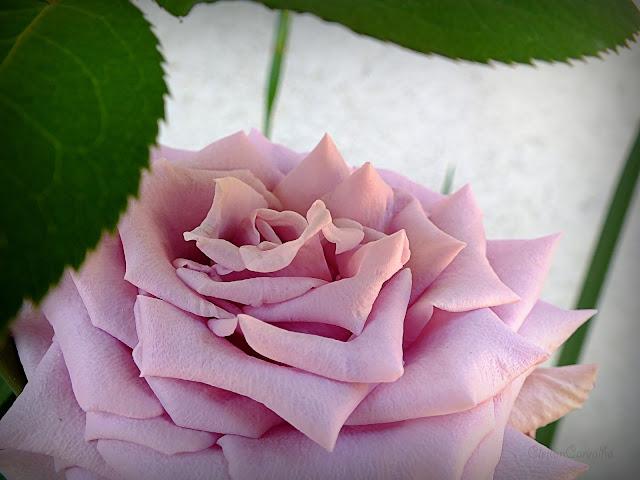 http://aprendendocomasimagens.blogspot.com/2015/10/o-meu-contemplar-com-natureza.html