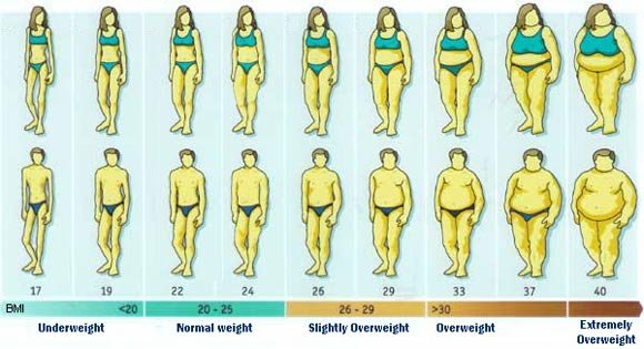 Image result for body mass index