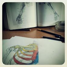 .Huesos.