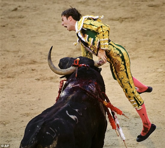 Funny Bull Fighting
