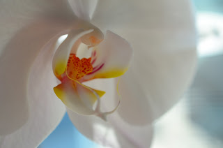Zoomed in on orchid