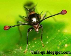 http://unik-qu.blogspot.com/