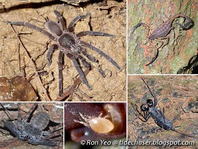 Arachnids (class Arachnida)