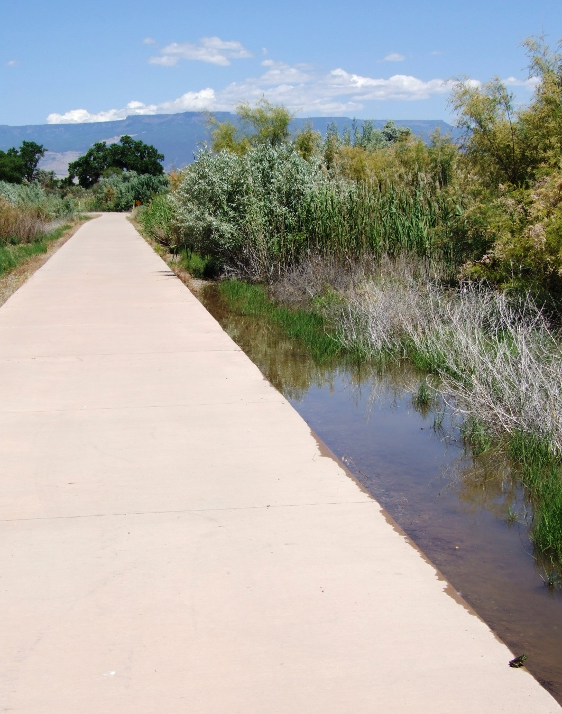 Skunk Tracks Frogs On Colorado River In Grand Junction