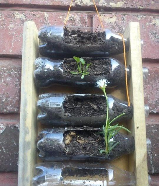 Huertos urbanos bah a de c diz siembras verticales de - Huerto de plantas aromaticas ...