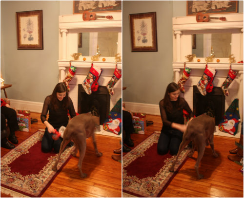 Dog Pacing And Whining With Toy