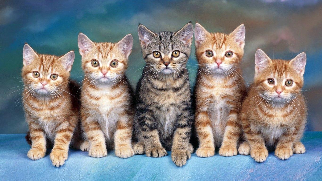 http://2.bp.blogspot.com/-8dwQ0CqsJuc/UaGifBqDXQI/AAAAAAAAFIQ/sXfoO2649jw/s1600/cat8.jpg