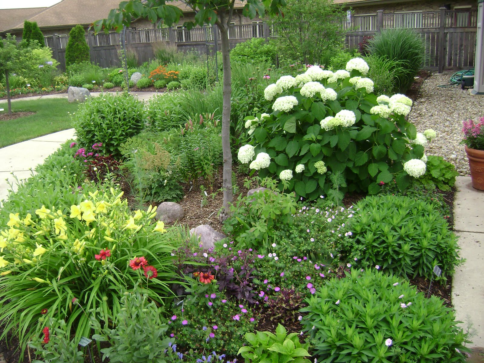 Prairie Rose's Garden: June 2011