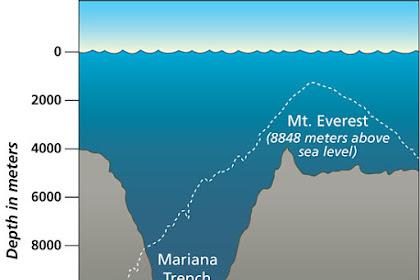 Inilah Mahluk Yang Hidup di Kedalaman Palung Laut Mariana