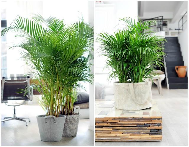 Decoraci n f cil 10 mejores plantas de interior for Plantas interior sin luz