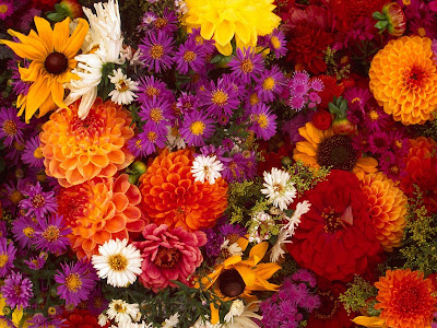 Flowers Normal Resolution Wallpaper 39
