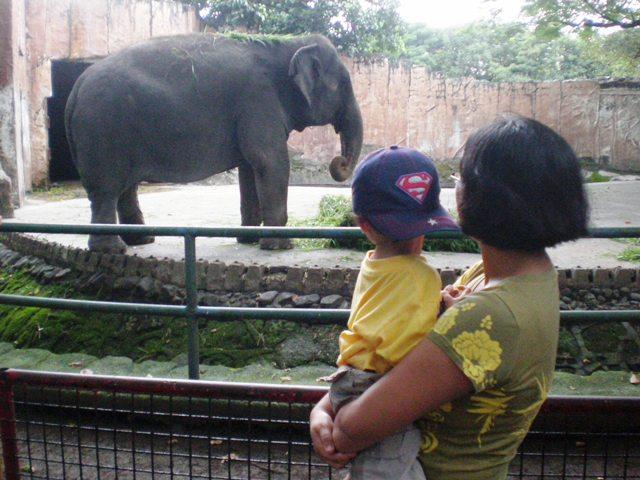 Manila Zoo Mali The Elephant