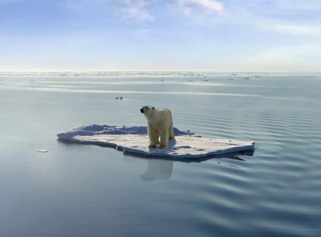 http://2.bp.blogspot.com/-8fASX1FhGAw/U54yBJN5pLI/AAAAAAAAEK4/oYbYnDdXpFw/s1600/global-warming-polar-bears-.jpg