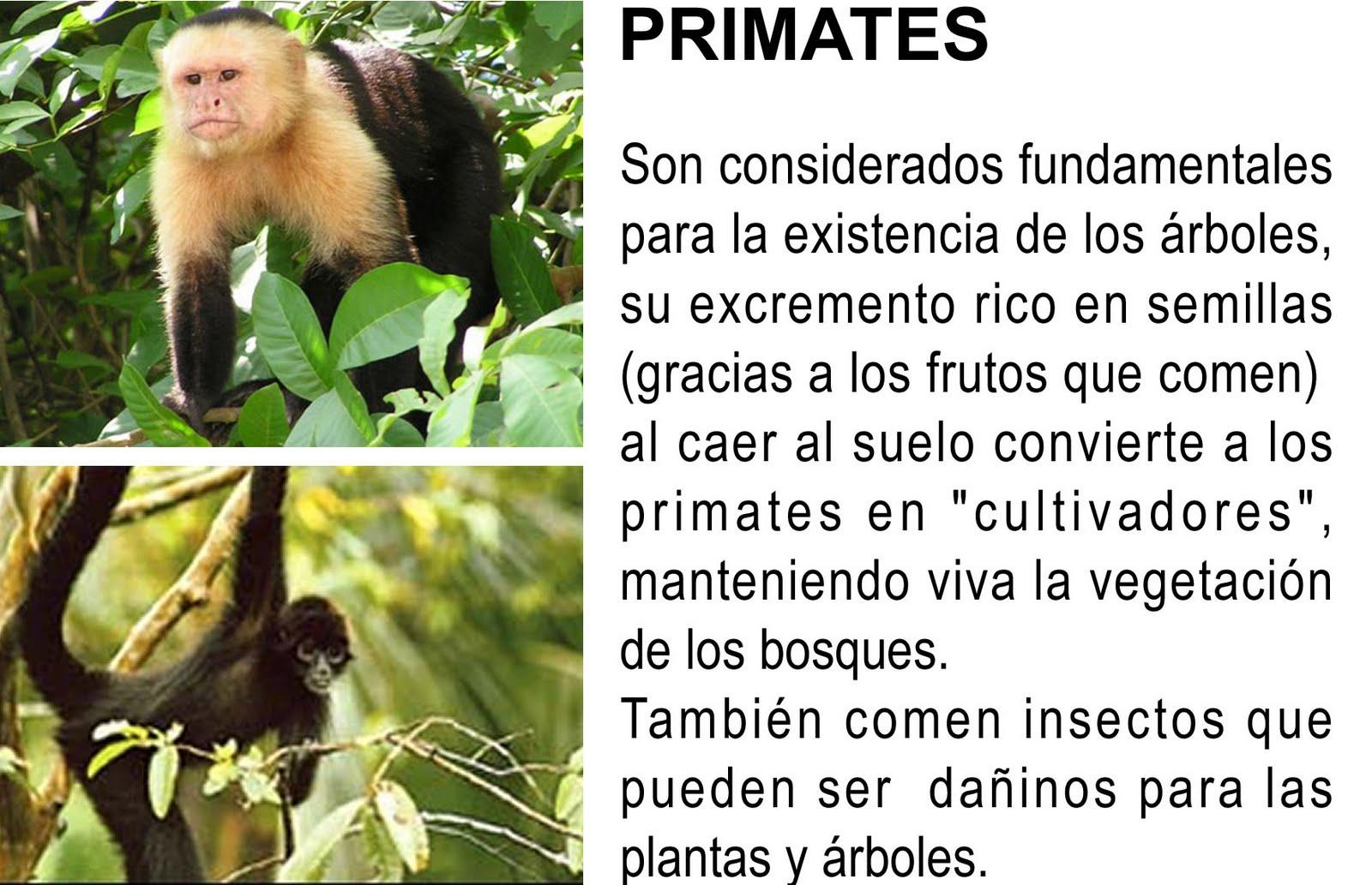 la importancia de los animales: