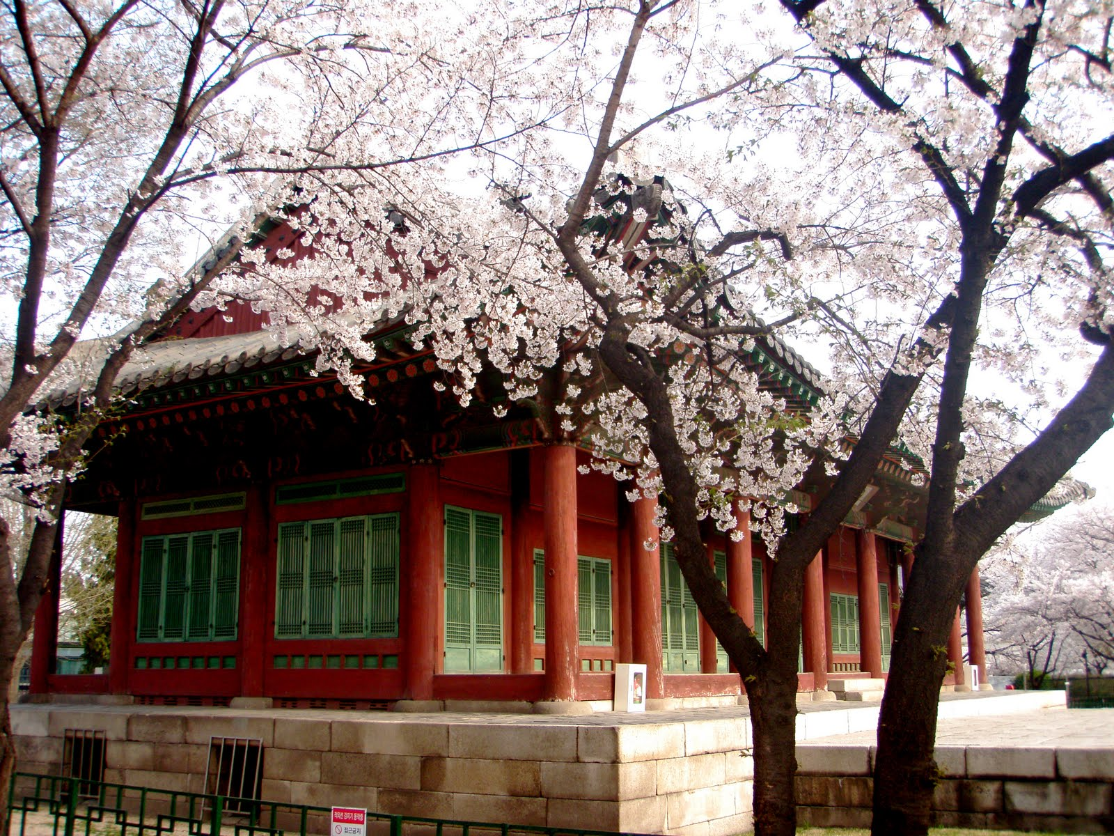 Image result for samcheong-dong cherry blossom