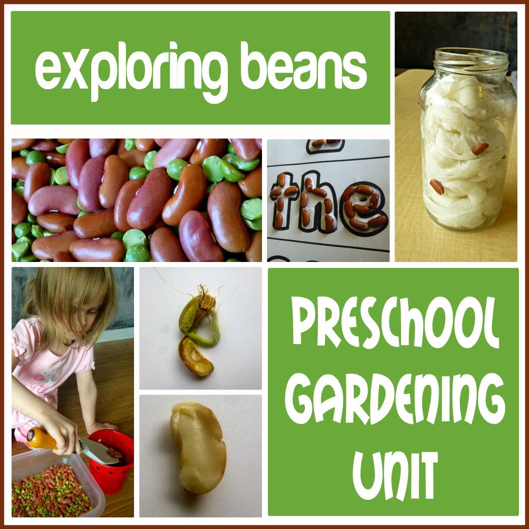 Finding The Teachable Moments  Preschool Gardening Unit
