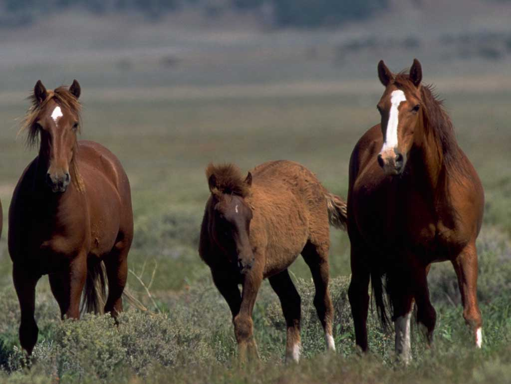 Great   Wallpaper Horse Spring - wild+horses+wallpapers+28  Picture_808927.jpg