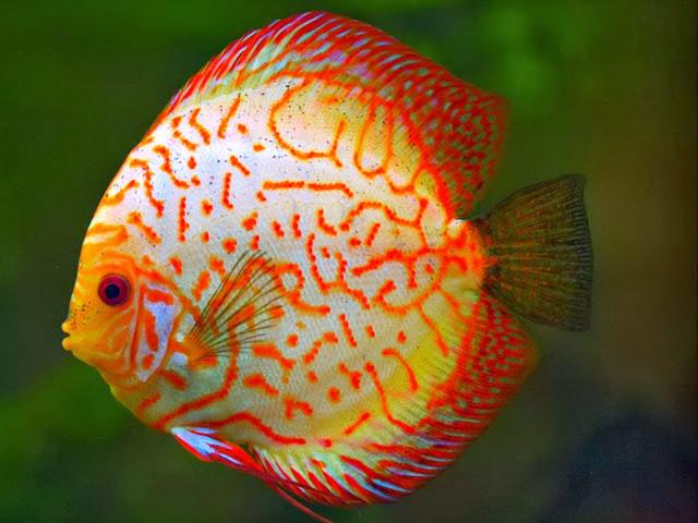 """<img src=""""http://2.bp.blogspot.com/-8g8wXJaRz0A/Uq8mIxrHxlI/AAAAAAAAFu0/MMj4hxgVMGw/s1600/jg.jpeg"""" alt=""""Fish wallpapers"""" />"""