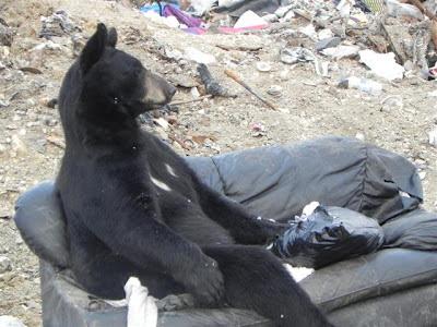 ours, noir, canapé, divan, sofa, décharge publique, déchets