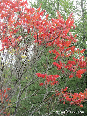 Fall Sumac tree from Setting for Four
