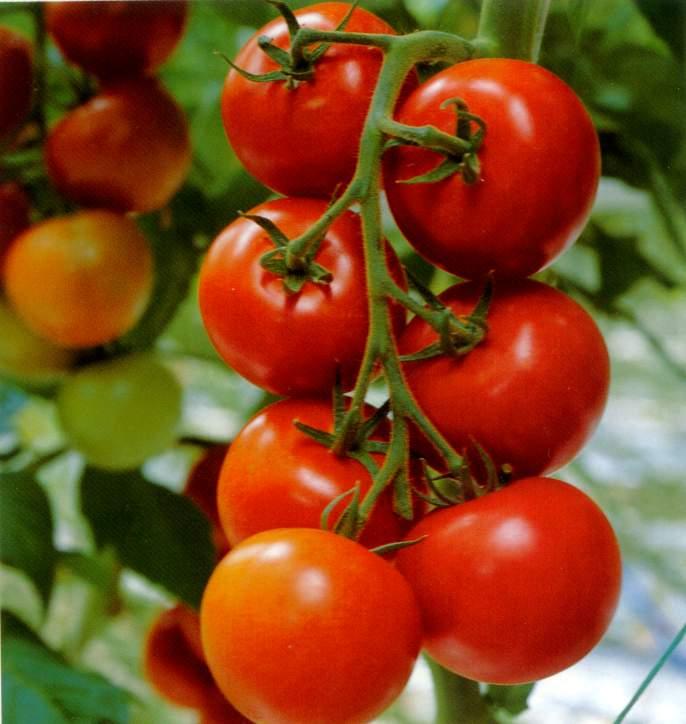 Manfaat Kandungan Buah Tomat Untuk Kecantikan
