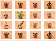 Nuevos Cactus en venta