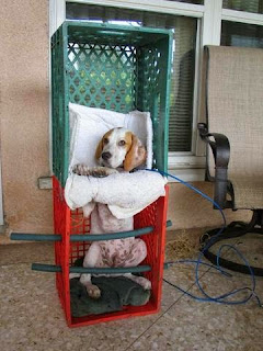 megaesofago em cães
