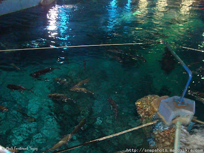 Siam Ocean World Glass Bottom Boat Ride Photo 3